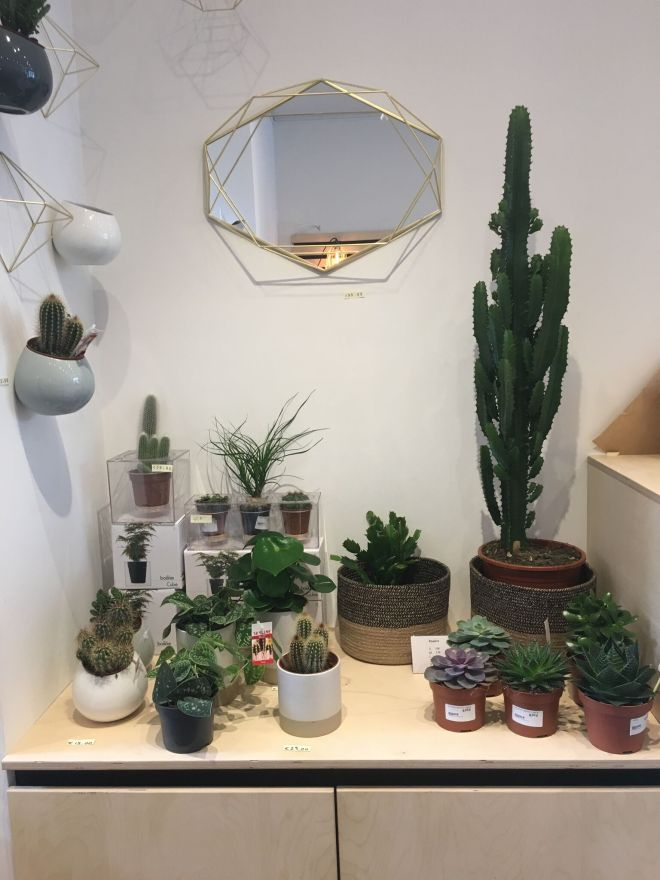 blenderplants